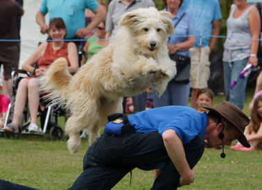 dancing dog display whizzy jumping
